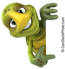morskab, skildpadde