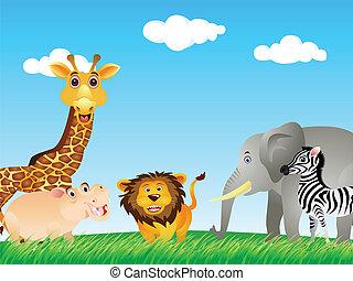 morsom, dyr, samling