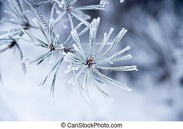 nåle, vinter
