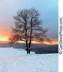 natur vinter, -, træ landskab, alene, solopgang