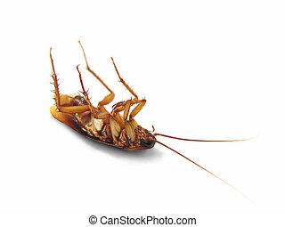 o, afdødte, kakerlak, isoleret