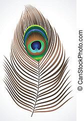 påfugl, abstrakt, fjer