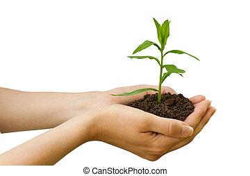 plante, agriculture., hånd