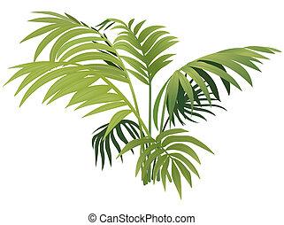 plante, bregne