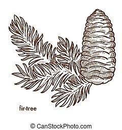 plante, komposition, isoleret, keglen, branch, firtree, ikon