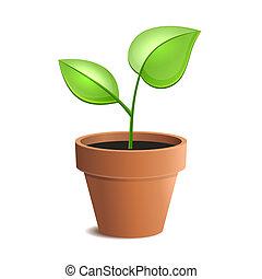 plante pot, unge, isoleret, vektor, grønne, backgrounds., hvid