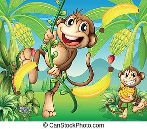 plante, to, banan, aber