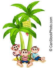 plante, under, tre, banan, aber