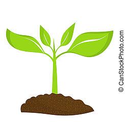 plante, unge