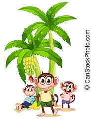 planter, tre, banan, aber