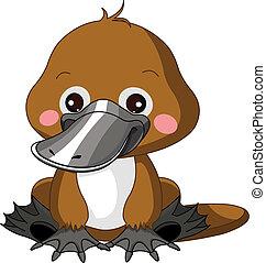 platypus, morskab, zoo.