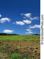 ploughed, græsgang