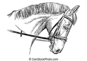 portræt, bidsel, hest