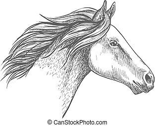 portræt, hest, hvid, skitse, blyant
