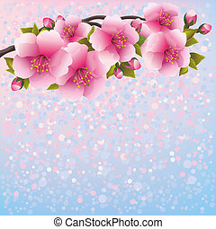 purpur, kirsebær, -, japansk, træ, blomstre, sakura, baggrund