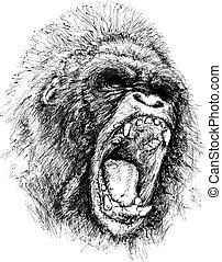 rasende, illustration, ape