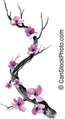 realistiske, blomstre, isoleret, baggrund., sakura, hvid
