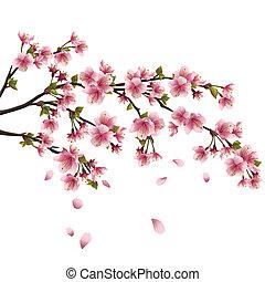 realistiske, blomstre, kirsebær, flyve, -, japansk, træ, isoleret, kronblade, sakura, baggrund, hvid