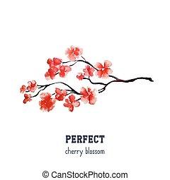 realistiske, blomstre, træ, -, japansk, isoleret, baggrund., sakura, kirsebær, hvid rød