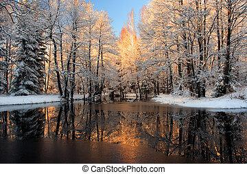 reflektion, gylden, sollys