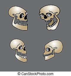 sæt, halloween, kranium