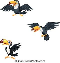 sæt, toucan, cartoon, samling