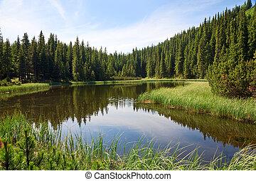 sø, bjerg, skov, sommer