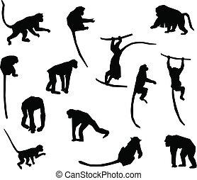 samling, ape, -, abe, silhouette., vektor