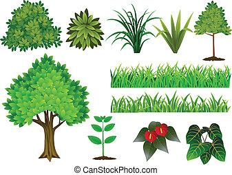 samling, træ, plante