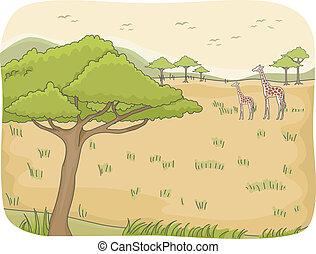 scene, safari