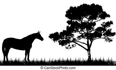 silhuet, hest, træ