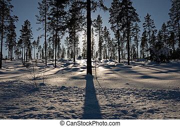 silhuet, træer