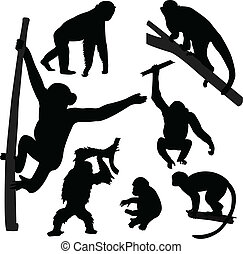 silhuetter, abe, samling