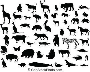 silhuetter, samling, dyr