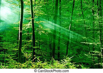 skov, drømme