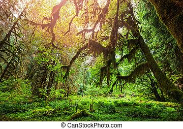skov, grønne