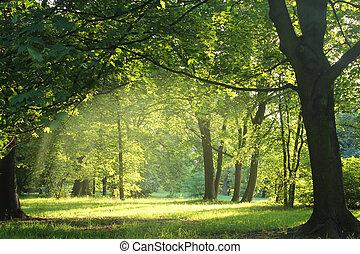 skov, sommer, træer