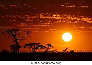 smukke, afrika, solnedgang, safari