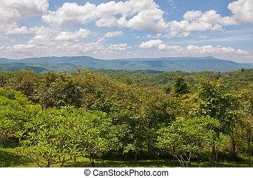 smukke, bjerg, grønnes landskab, træer