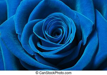 smukke, blå, rose