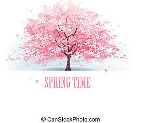 smukke, kirsebær træ, blomstre
