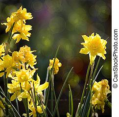 smukke, kunst, forår, baggrund., vild blomstrer, nartsizy