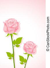 smukke, rose