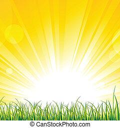 solskin, græs, stråler