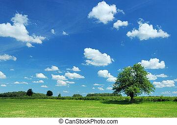 sommer, landskab
