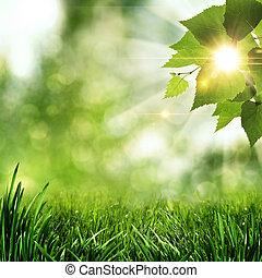 sommer, naturlig, abstrakt, baggrunde, formiddag, tidligere, skov
