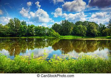 sommer, skov, sø