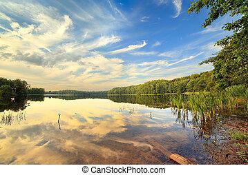 sommer, træ, sø, dag