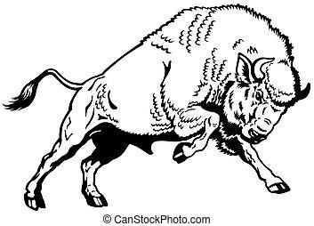 sort, europæisk, bison, hvid