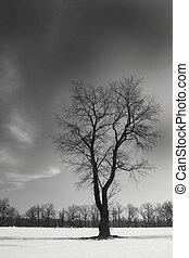 sort, singel, træ